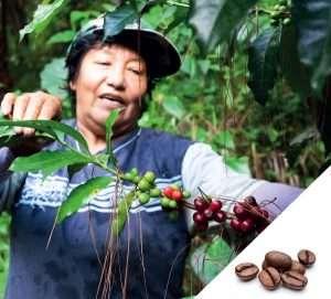 NEU: Specialty Coffee Perù Cipizù