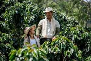 Permacultura: Come coltivare un caffè sostenibile