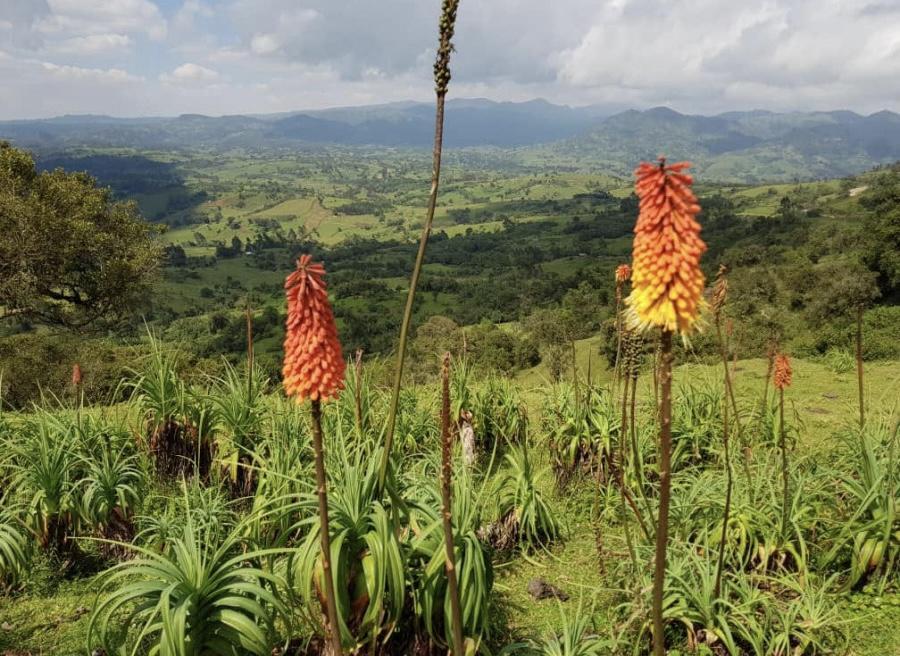 IL NUOVO SPECIALTY COFFEE: ETIOPIA BALE MOUNTAIN